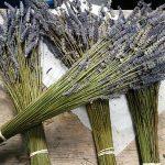 Nguồn hàng hoa khô lavender, oải hương bán buôn bán lẻ